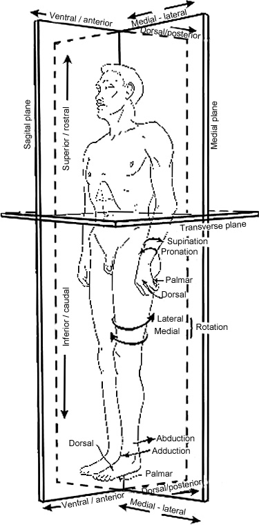 External View of the Human Body