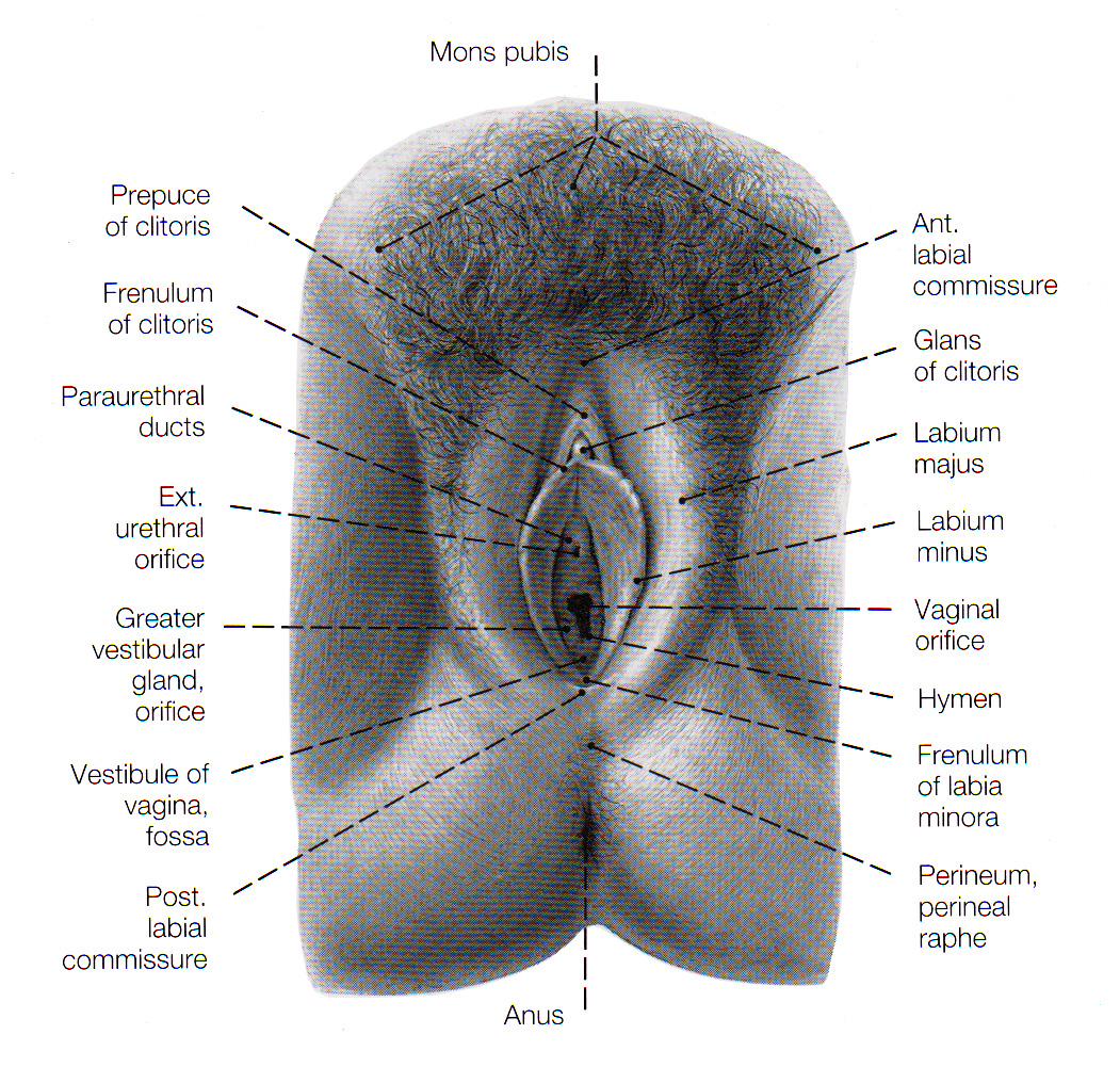 The Female Reproductive System - anatomy and physiology.
