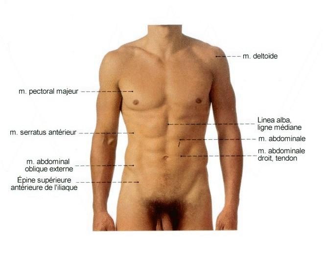 La douleur dans lestomac rend à un gauche côté et le dos