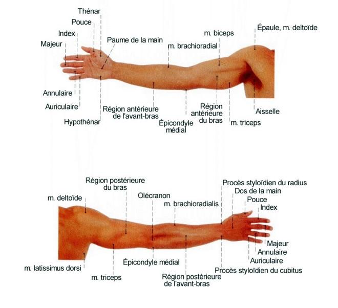 Les moyens nationaux du traitement du dos