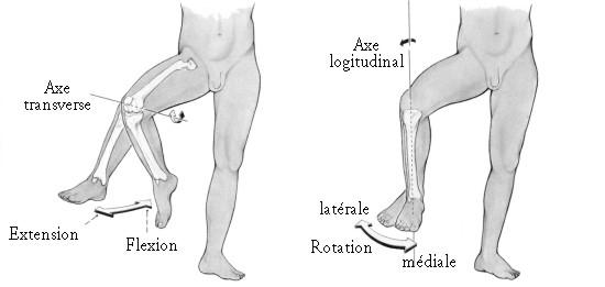 Les mouvements du corps humain