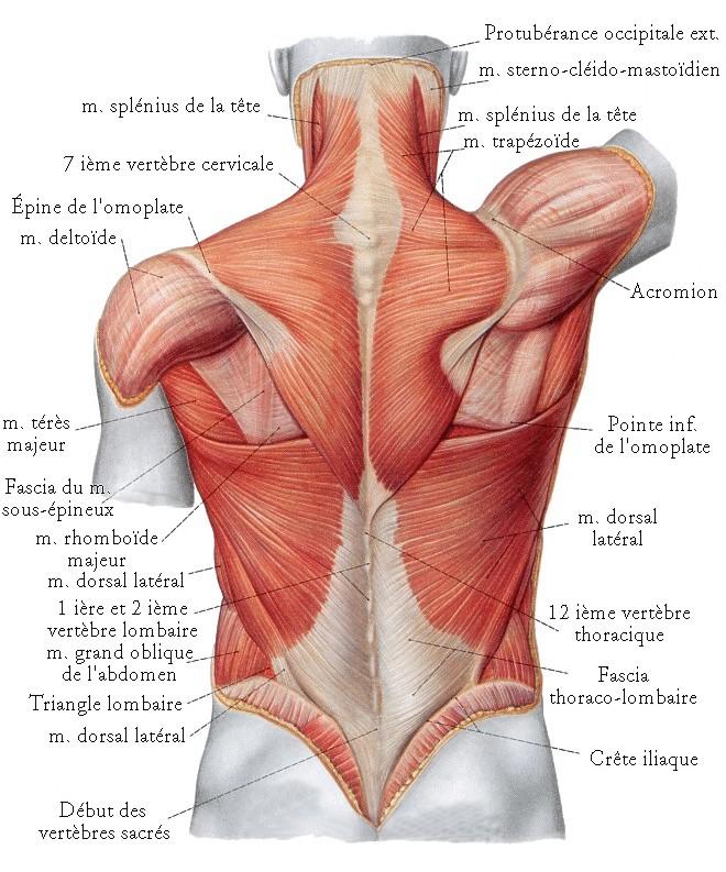 La hernie intervertébrale du service cervical la clinique