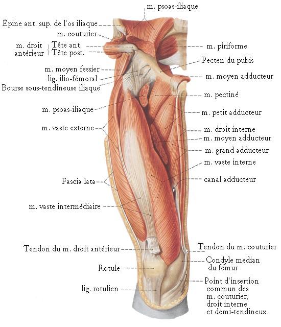 Osteokhondroz et le rectum