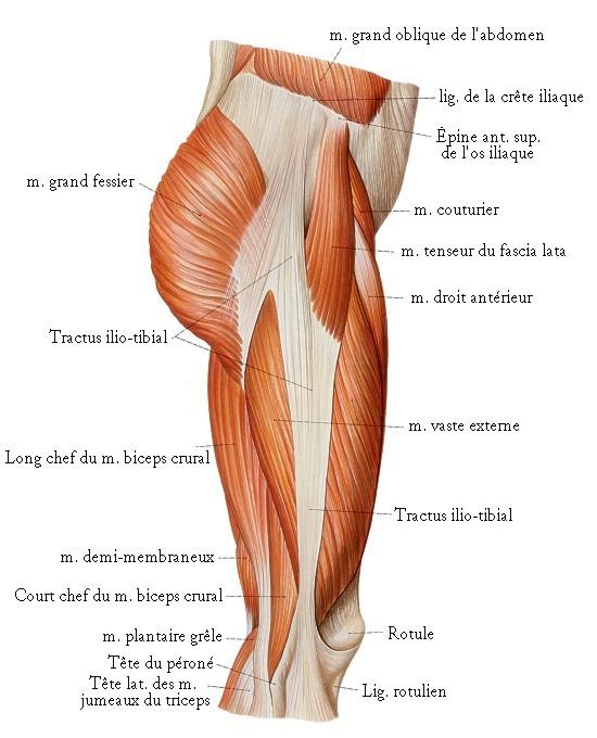 Douleur genou tractus ilio tibial for Douleur genou exterieur