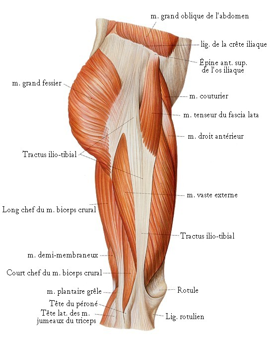 Douleur genou tractus ilio tibial for Douleur au genou gauche interieur