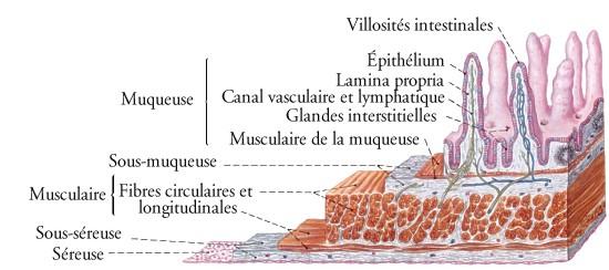 Masturbation et mouvement des intestins