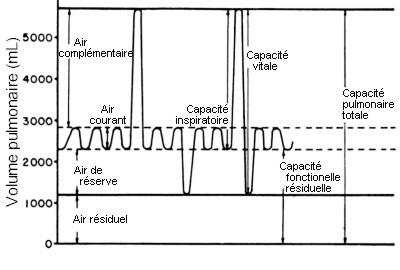 La respiration l 39 acte d 39 amener l 39 oxyg ne notre sang - Capacite calorifique de l air ...
